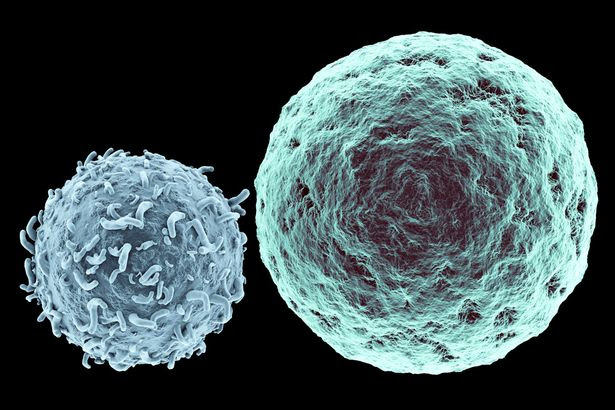 Killer T-Lymphocyte approaching Cancer Cell