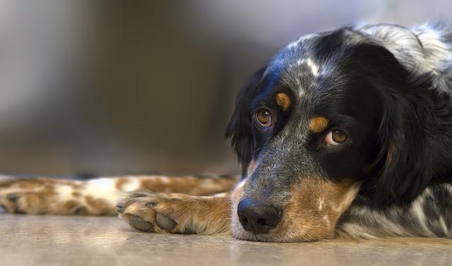 dog-551413_640