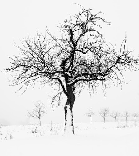 Snowtrees 21311