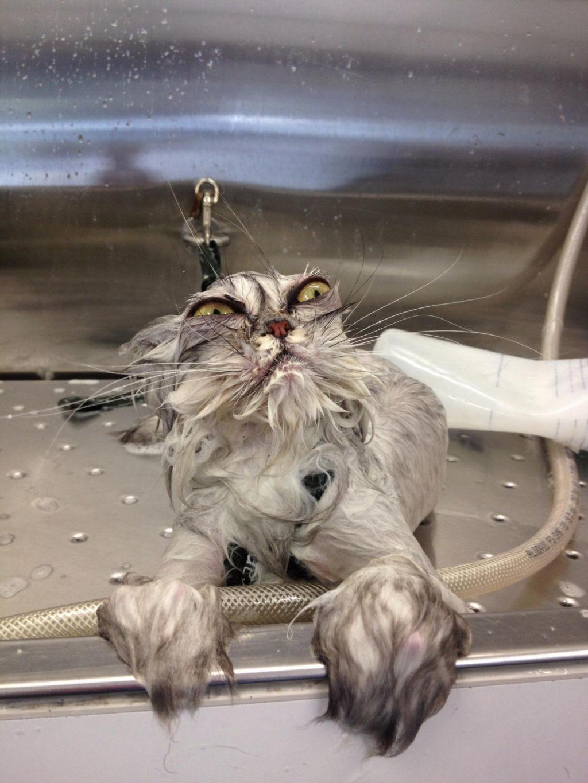 Fotografias engraçadas de gatos tomando banho 01