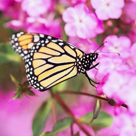 Plante UMA Nectar Smorgasbord