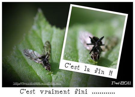 C_est_la_fin_5_sign_e