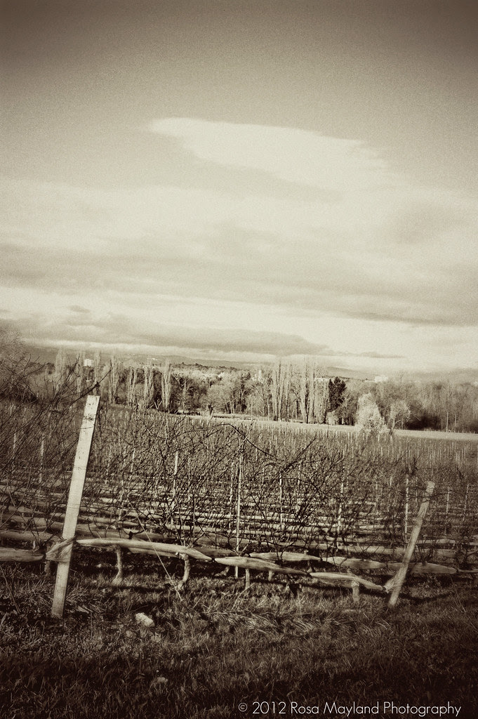 Vineyard 1 11 bis