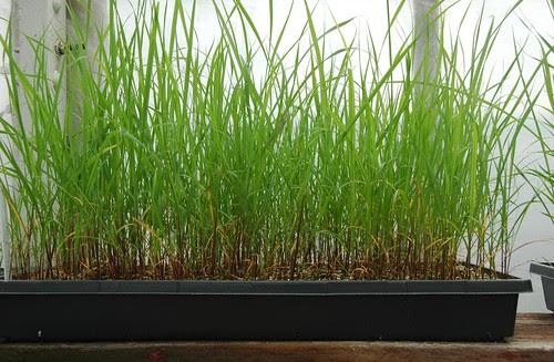 Propagation Greenhouse, Greenbelt Native Plant Center