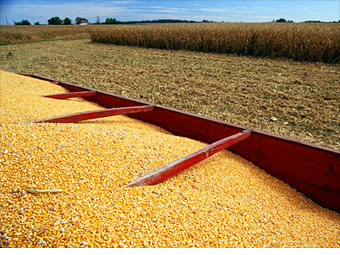 The Pros And Cons Of Biofuels Corn Ethanol 1 Fortune