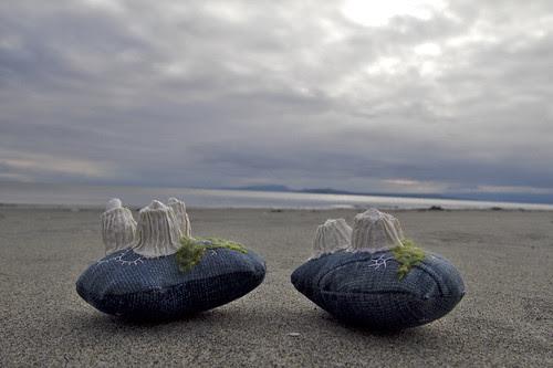 barnacles at the beach