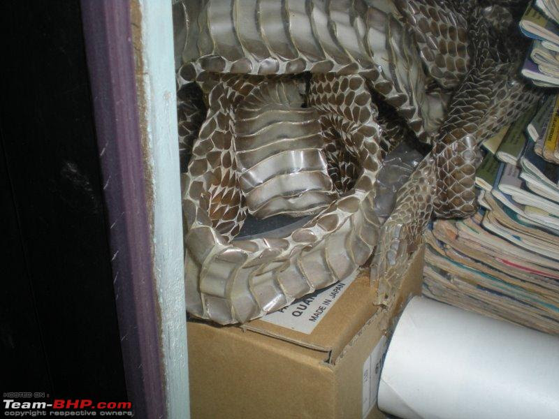 There are just 4 cases of king cobra bite in the last 4 decdes,