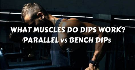 muscles  dips work parallel  bench dips