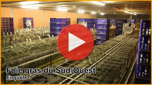 Foie gras du Sud-Ouest, enquête de L214