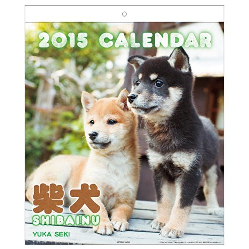 A.P.J. 2015年度カレンダー 関由香 柴犬カレンダー No.020 1000055399
