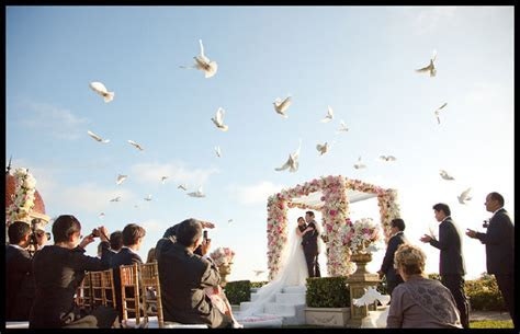 White wedding Doves, Dove Releases , white doves for