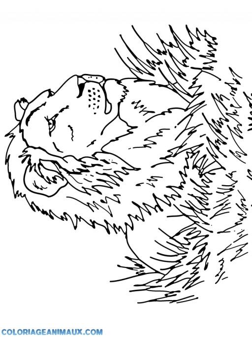 Coloriage Beau Lion De La Savane à Imprimer