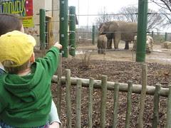 where's the baby elephant?