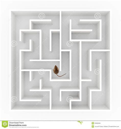 Mouse in maze stock image. Image of rodent, smart, decisions   33982995