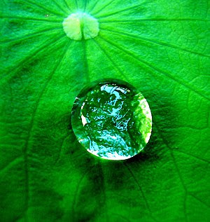 A w:drop of water on a leaf.