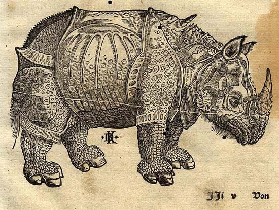 The rhinoceros of Dürer in the Cosmographia of Sebastian Münster, around 1550