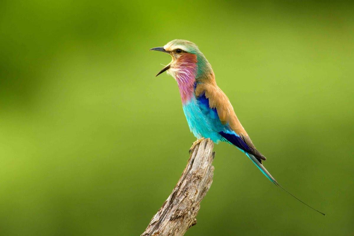 Nature Conservancy: as 20 melhores fotos da Natureza de 2013 18
