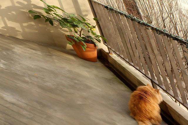 anamorphic cat