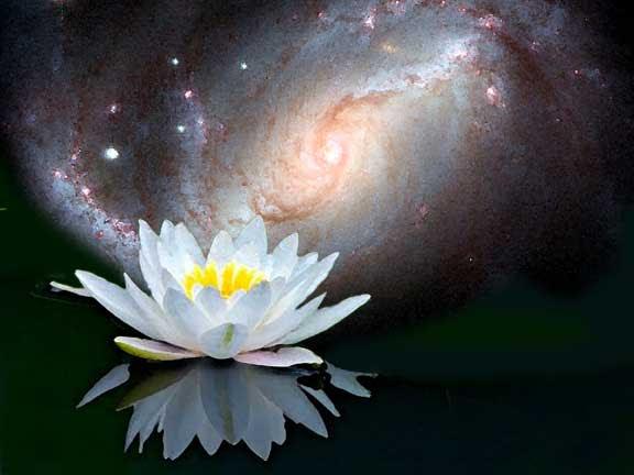 electronic illustration: Lotus opening to the universe