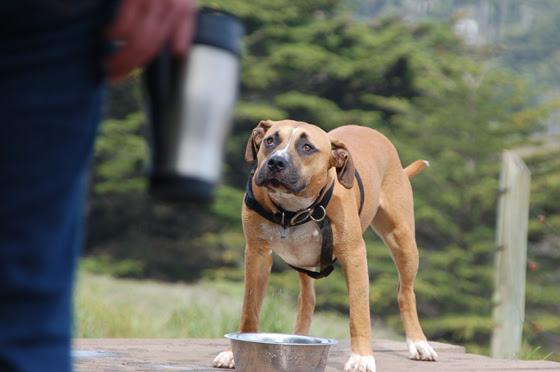 5dog-coffeecup.jpg
