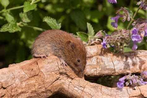 How To Get Rid Of Field Mice In My Garden