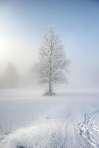 Lonely tree on Planina lake por Lovro67