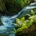 Silberbachtal # 8 - Wasserfall, Klippen und Farn - Waterfall, cliffs and fern