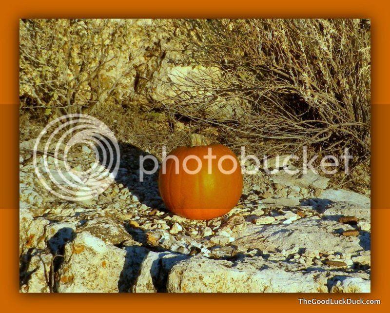 Pumpkin gift