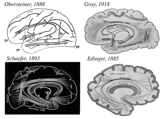 Redescubren una región olvidada del cerebro