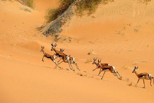 La fauna se ha acostumbrado a la vida en el desierto
