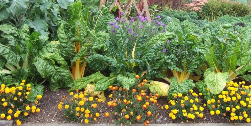 Resultado de imagen para alelopatia en hortalizas