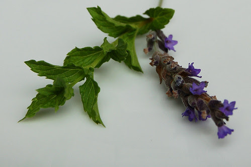 Sprigs of mint and lavender from our garden by Eve Fox copyright 2008