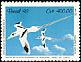 White-tailed Tropicbird Phaethon lepturus