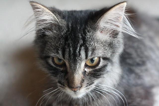 the new kitten!