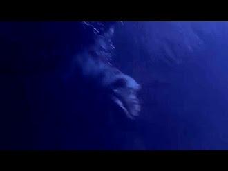 LAKE MONSTER ATTACKS Woman! Video / Monstruo Ataca a Mujer en un Lago