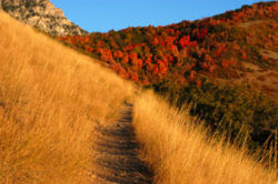 An autumn mountain trail