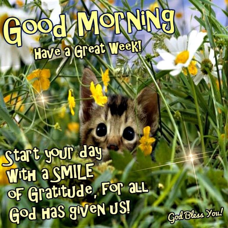 Good Morning Have A Great Week Start Your Day With A Smile Pictures