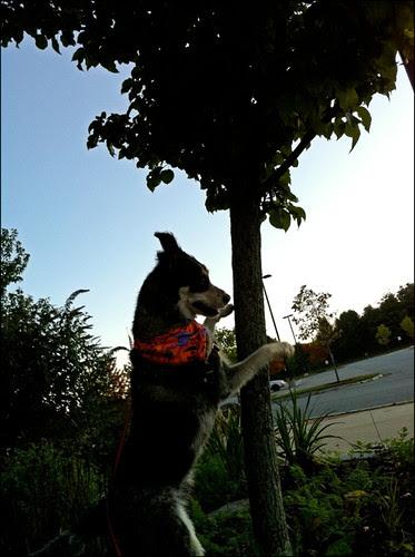 Rut roh up a tree!