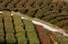 road-through-orchard
