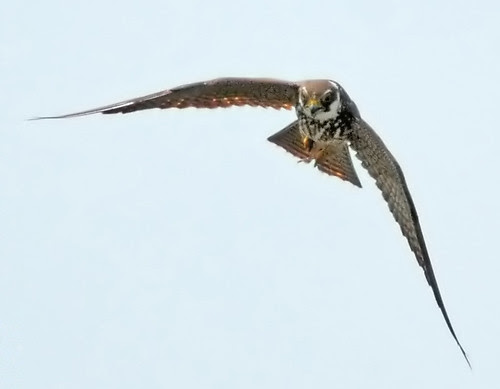 Hobby Fly Past