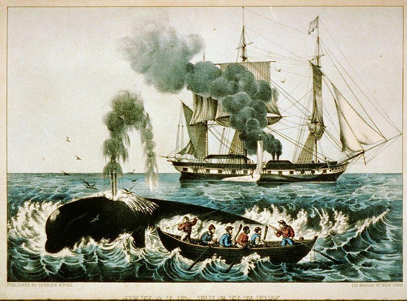 File:Walfang zwischen 1856 und 1907.jpg