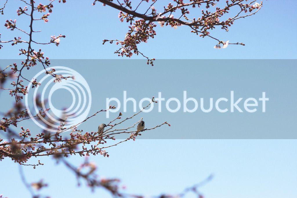 photo IMG_0096_zpsyhngnm4j.jpg