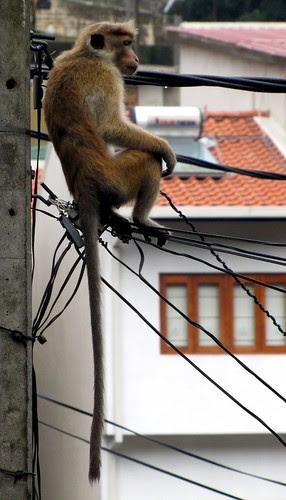 urban wild life