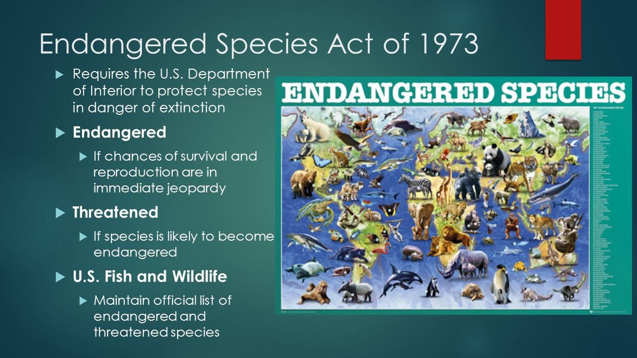 Endangered+Species+Act+of+1973