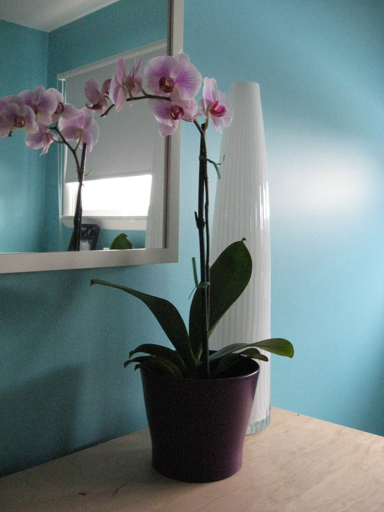 My first Orchid - Feb 2010