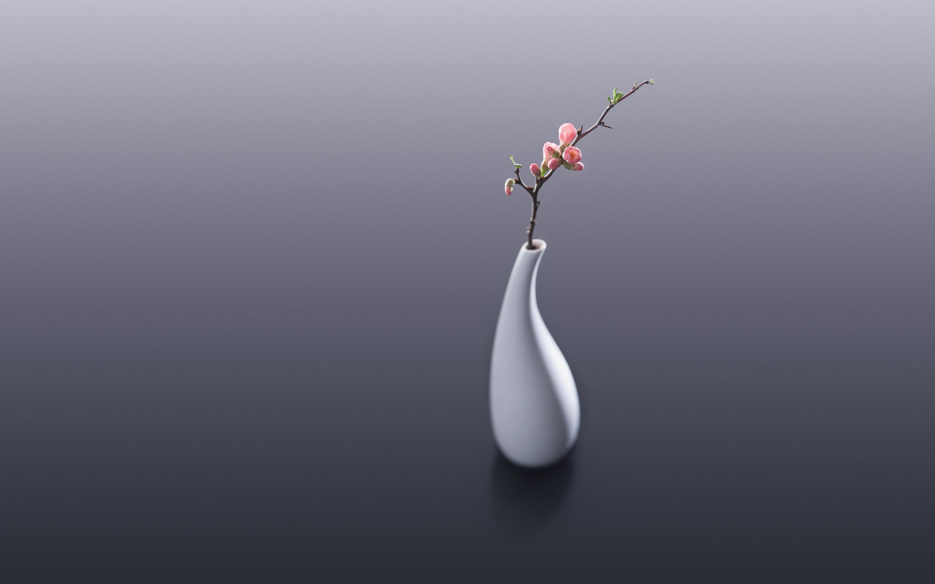 Flower Vase Wallpapers Hd Wallpapers