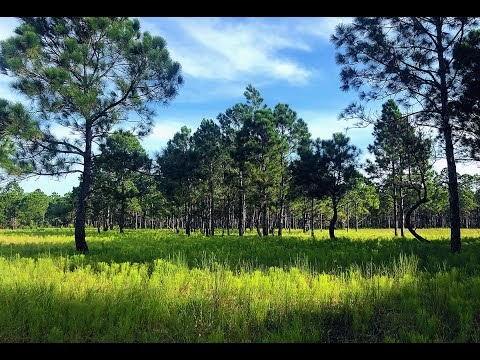 Wildlife Monitoring: Florida Master Naturalist Program