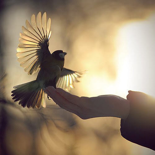 animal, beautiful, bird, fly, flying, sun, sunset, wings