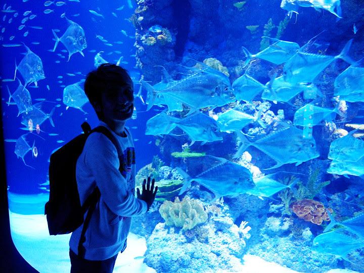 typicalben with fishes S.E.A. Aquarium world's largest aquarium