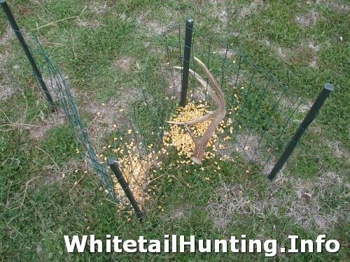 Tifany Blog Build How To Make A Shed Antler Trap